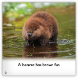 Beaver from Zoozoo Animal World