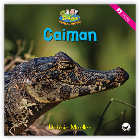 Caiman from Zoozoo Animal World