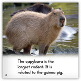 Capybara from Zoozoo Animal World