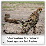 Cheetah Big Book