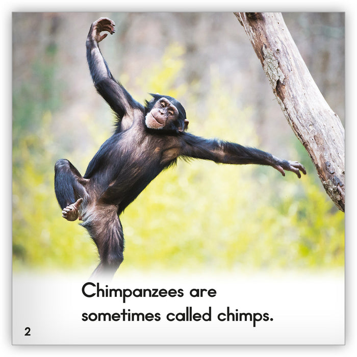Chimpanzee Big Book