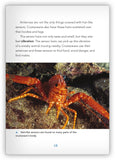 Clever Crustaceans from Underwater Encounters