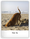 Dogs Big Book