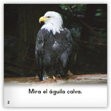 El águila calva from Zoozoo Mundo Animal
