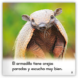 El armadillo from Zoozoo Mundo Animal