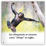 El chimpancé from Zoozoo Mundo Animal