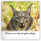 El lince from Zoozoo Mundo Animal