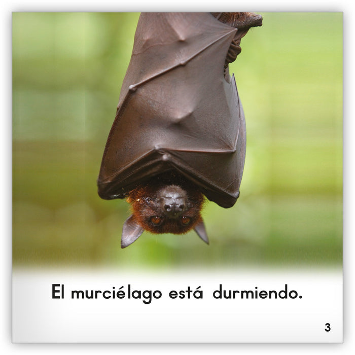 El murciélago from Zoozoo Mundo Animal