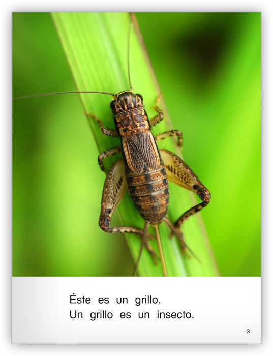 Es un insecto Big Book Leveled Book