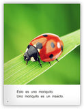 Es un insecto Big Book