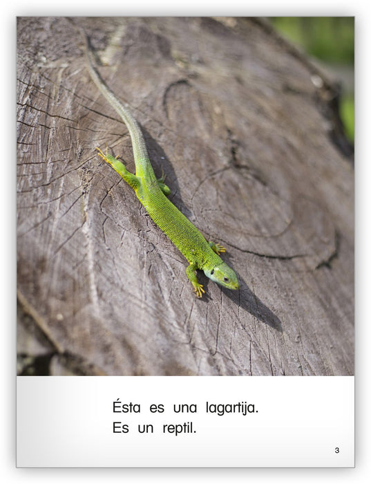 Es un reptil Big Book