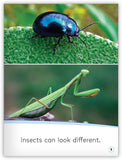 Insects from My World