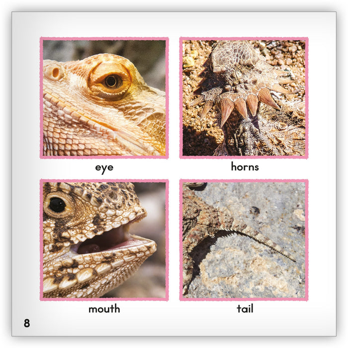 Horned Lizard from Zoozoo Animal World