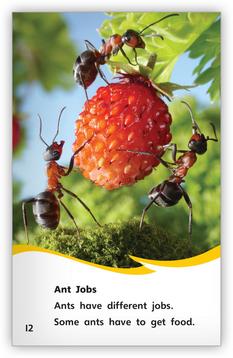 Incredible Ants from Fables & the Real World