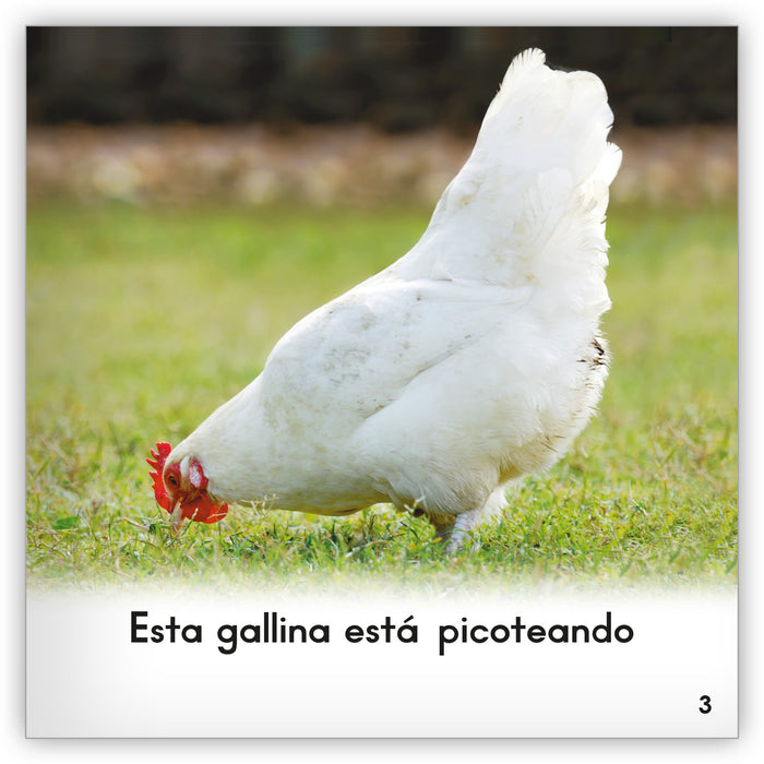La gallina Leveled Book