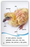 Las palomas Leveled Book