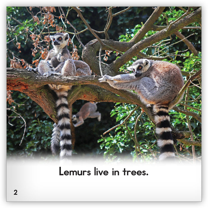 Lemur from Zoozoo Animal World