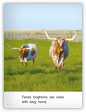 Longhorns from Kaleidoscope Collection