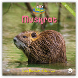 Muskrat from Zoozoo Animal World