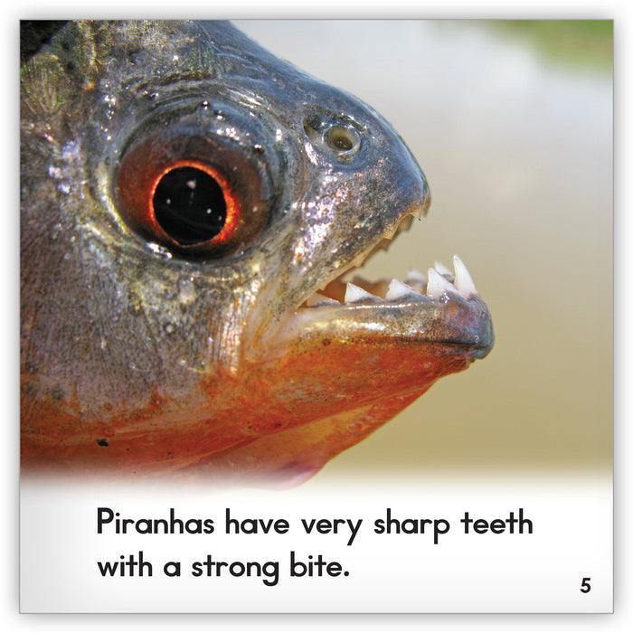 Piranha from Zoozoo Animal World