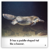 Platypus from Zoozoo Animal World