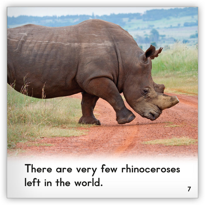 Rhinoceros Big Book
