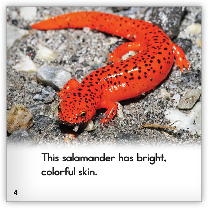 Salamander from Zoozoo Animal World