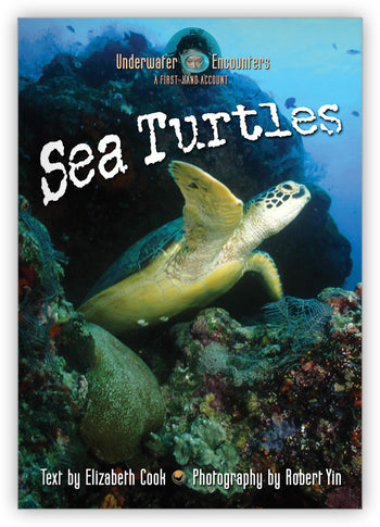 Sea Turtles from Underwater Encounters