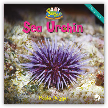 Sea Urchin from Zoozoo Animal World