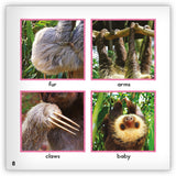 Sloth Big Book