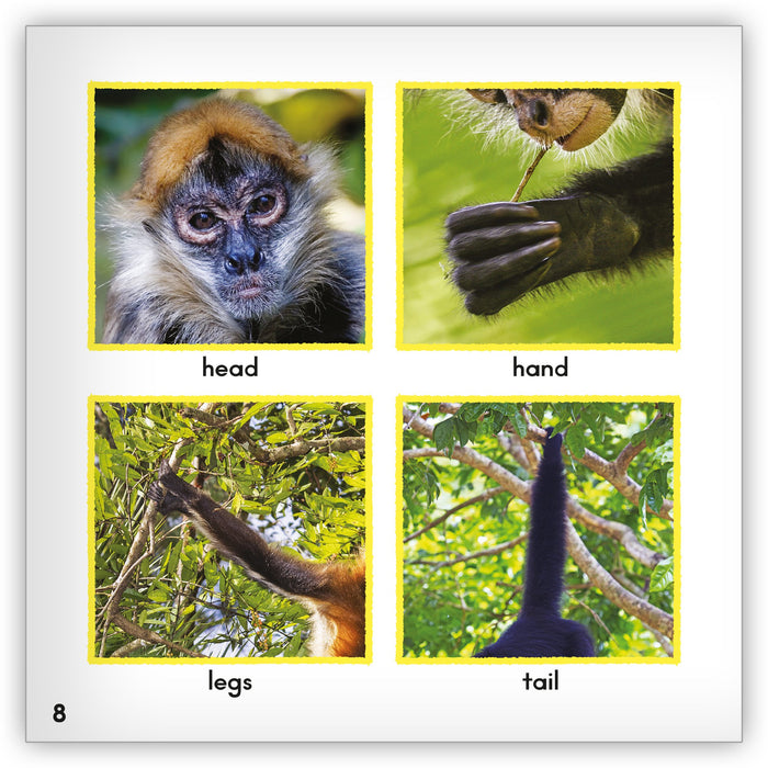 Spider Monkey Big Book