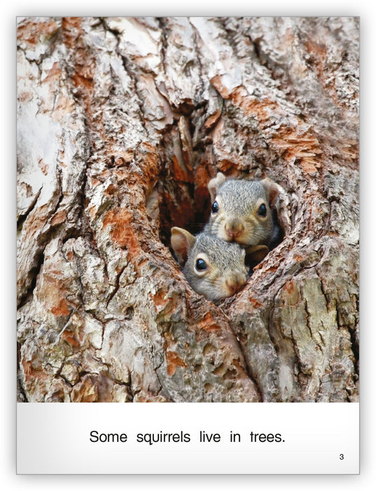 Squirrels Big Book