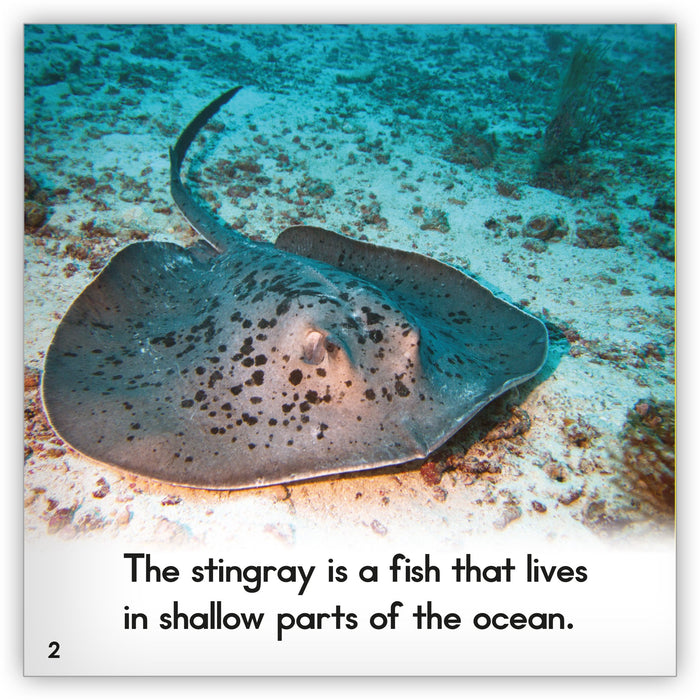 Stingray Leveled Book
