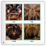 Tarantula Big Book