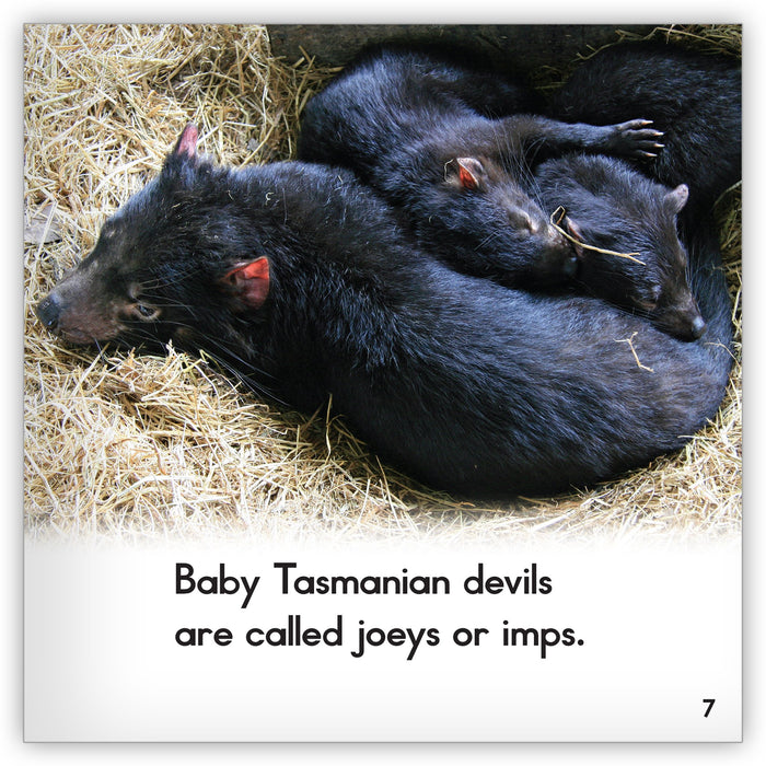 Tasmanian Devil from Zoozoo Animal World