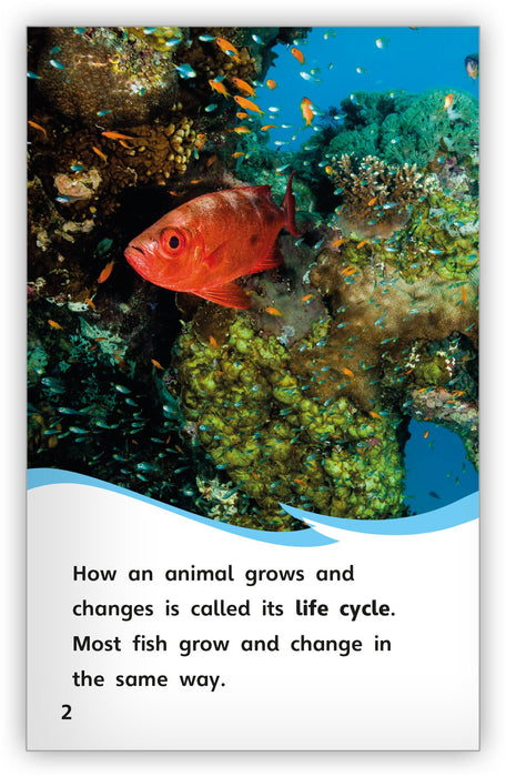 The Life Cycle of a Fish from Fables & the Real World