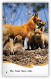 The Life of a Fox from Fables & the Real World