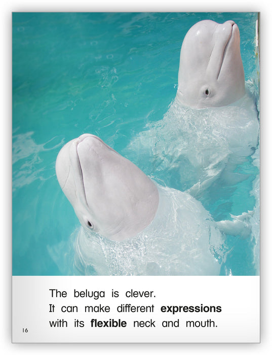 The White Whale Leveled Book
