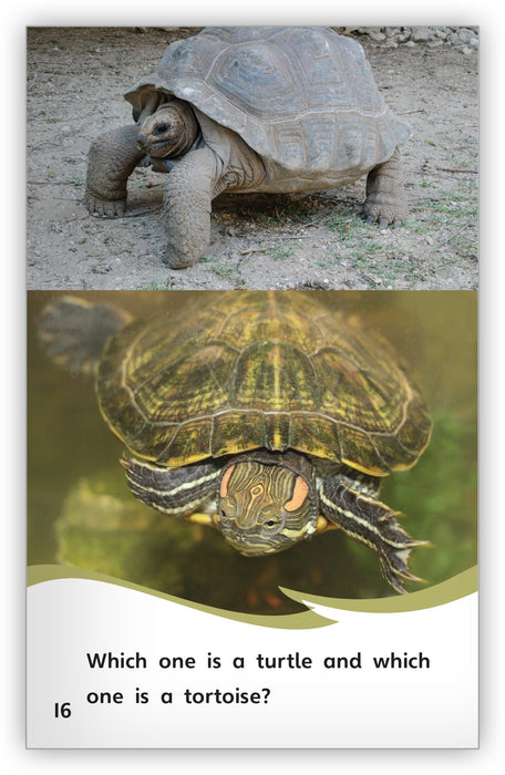 Turtle or Tortoise? from Fables & the Real World