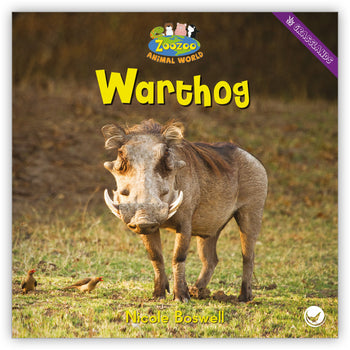 Warthog from Zoozoo Animal World