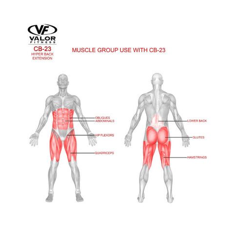 Valor Fitness  CB-23  Hyper Back Extension Muscle Group Used