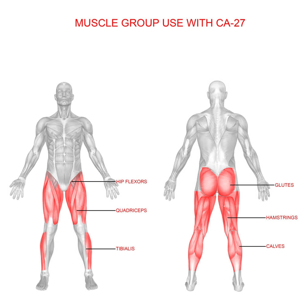 Valor Fitness CA-27 Leg Stretch Muscle Group Use