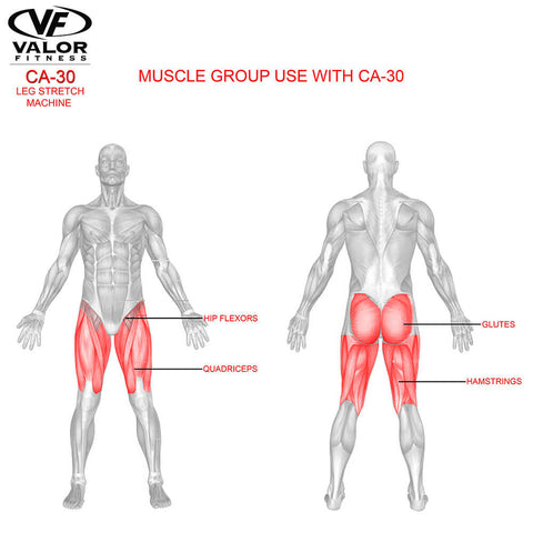 Image of Valor Fitness CA-30 Leg Stretch Machine Muscle Group