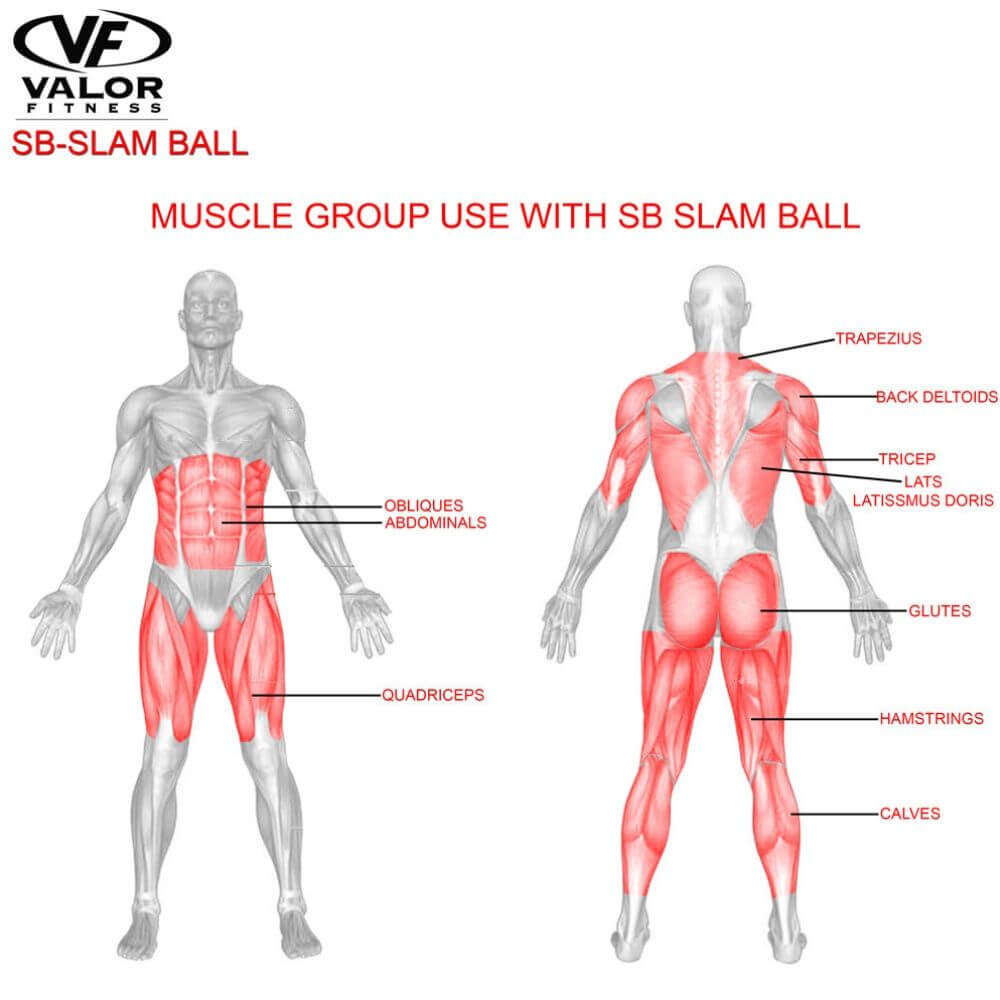 Valor Fitness SB Slam Balls Muscle Group
