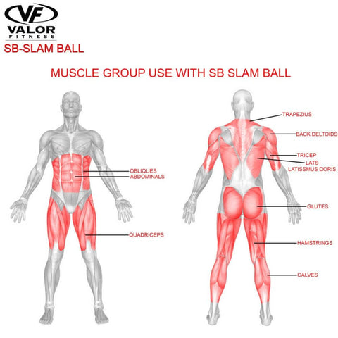 Image of Valor Fitness SB Slam Balls Muscle Group