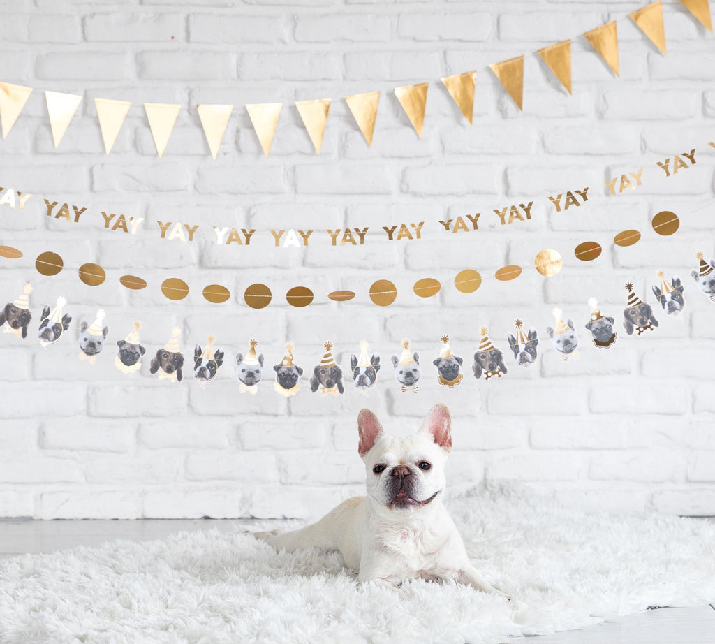Party Dog Banner Decor My Mind's Eye