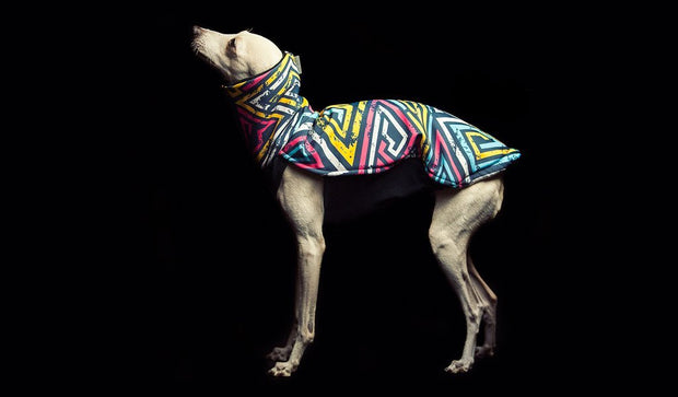 Waterproof, Warm, Softshell Jacket for Sighthound/Italian Greyhound ( Graffiti Design)