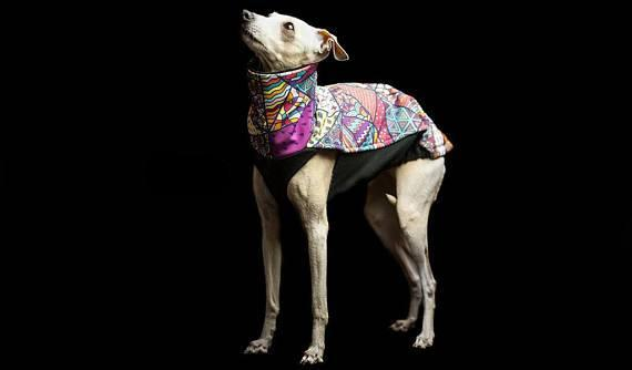 Waterproof, Warm and Colourful Softshell Jacket for Sighthound/Italian Greyhound