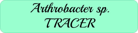 Arthrobacter sp. TRACER
