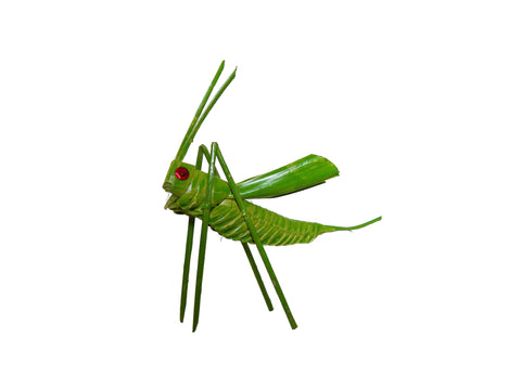 Grillo de Palma  |  Palm Cricket